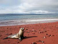 Галапагосские острова, красный песок на острове Рабида
