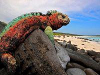 Галапагосские острова, морская игуана