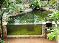 akwarium ogrodowe5