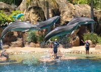 Парк Морской Мир (Sea World)