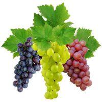 korisno za mršavljenje grožđa