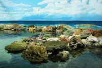 Wielka rafa koralowa australia3