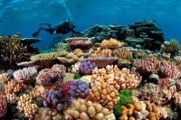Wielka rafa koralowa australia4