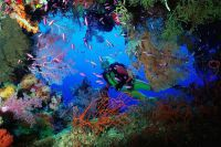 Wielka rafa koralowa australia5
