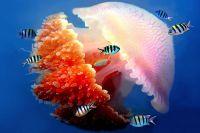 Wielka rafa koralowa australia6
