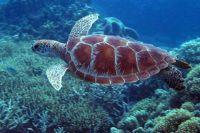 Wielka rafa koralowa australia8