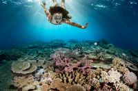 Wielka rafa koralowa australia9