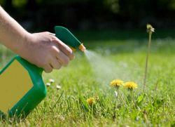 herbicydy chwastów na trawniku