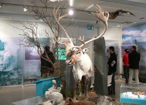 Городской музей ледников