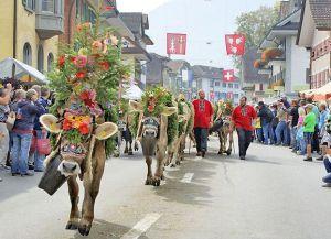 Возвращение пастухов в праздник Альпабфарт