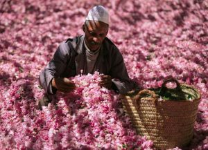 Праздник роз в Марокко
