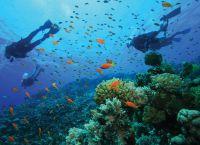 Богатый мир рифов