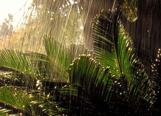 Дожди в стране