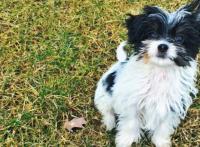 На днях в Instagram супермодели появилось фото забавного щенка