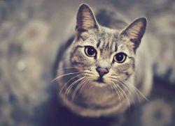 Ile kotów żyje średnio 1
