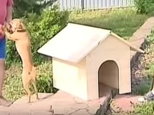 Jak postavit psí dům8