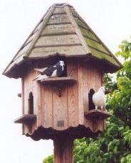 holub domu