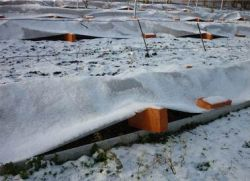 Как на зиму закрыть виноград
