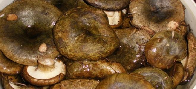 Gozdni hrustljavi sodi s hladnim soljenjem