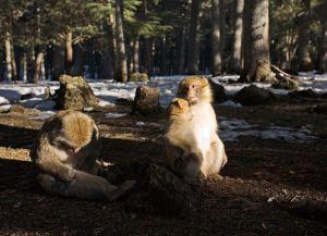 Обезьяны в национальном парке