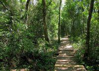 Вечнозеленая природа национального парка Игуасу