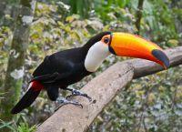 Игуасу - дом для экзотических птиц