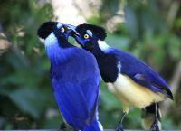 Национальный парк Игуасу - это место обитания многих видов птиц