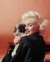 Мэрилин и ее пушистый друг. Нью-Йорке в 1955 год