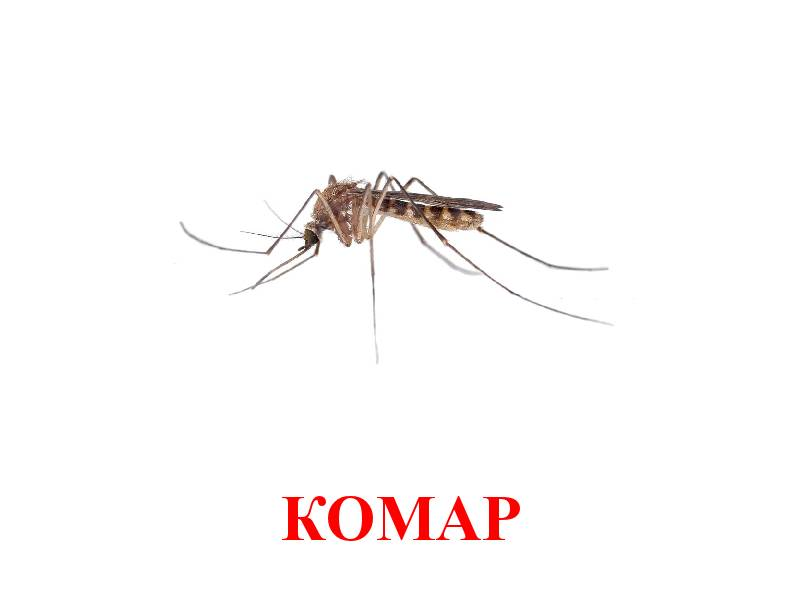 hmyz pro děti