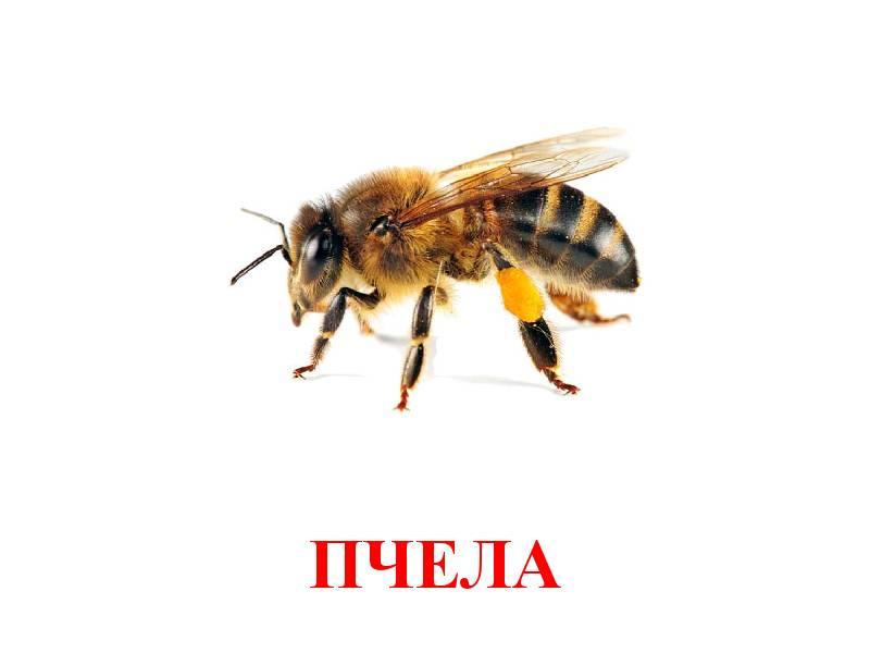 hmyz pro děti 9