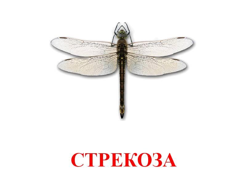 hmyz pro děti 10