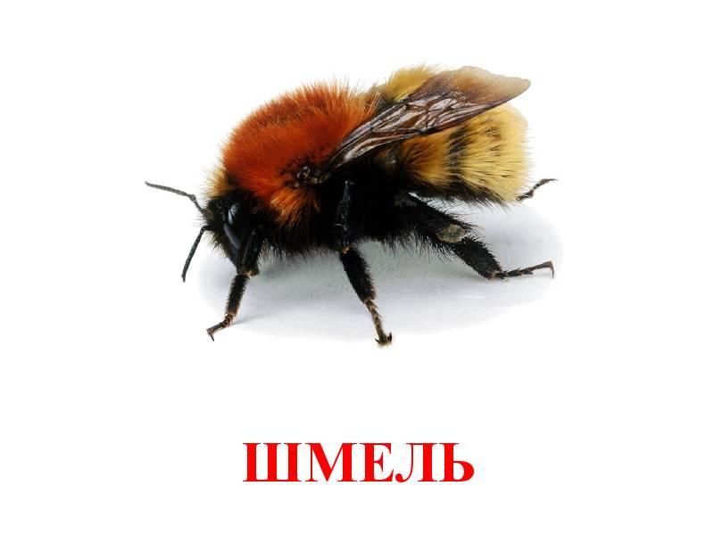 hmyz pro děti 11