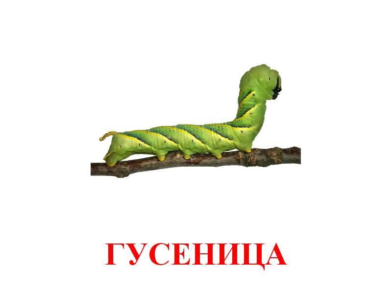 hmyz pro děti 2