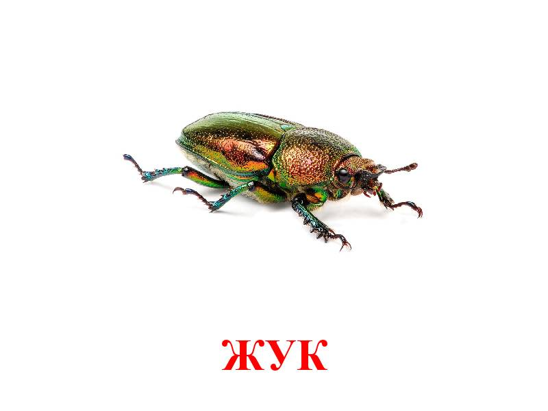 hmyz pro děti 3