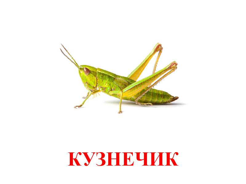 hmyz pro děti 4