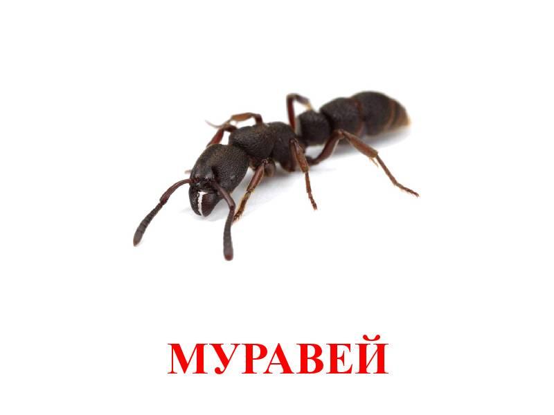 hmyz pro děti 5