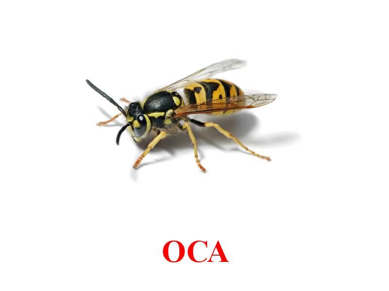 hmyz pro děti 7
