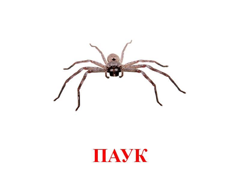 hmyz pro děti 8