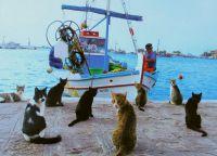 На Кипре везде можно увидеть множество котов