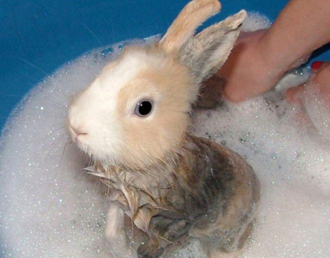 можно ли мыть лапки кроликам