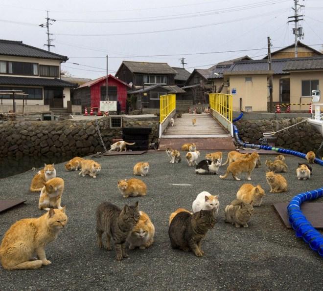 Остров кошек - Аосима