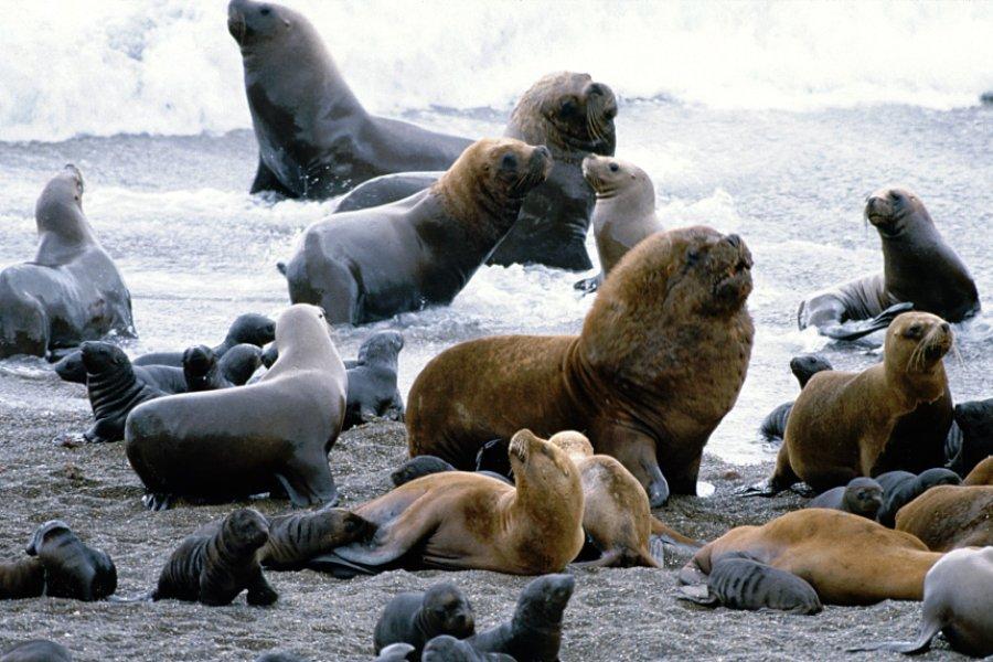Фауна островов Окленд