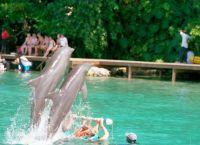 Долфин-Коув