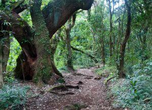 Тропы Килиманджаро