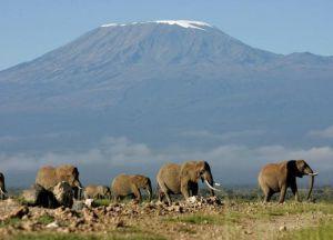 Дикие стада слонов