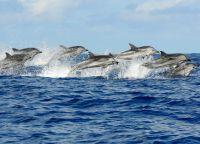 Дельфины в Кизимкази