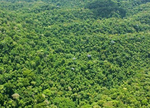 Лес Dwarf Forest