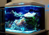 światło do akwarium