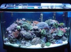 Svetloba za ribe v akvariju