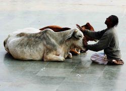Mad kravja bolezen pri ljudeh